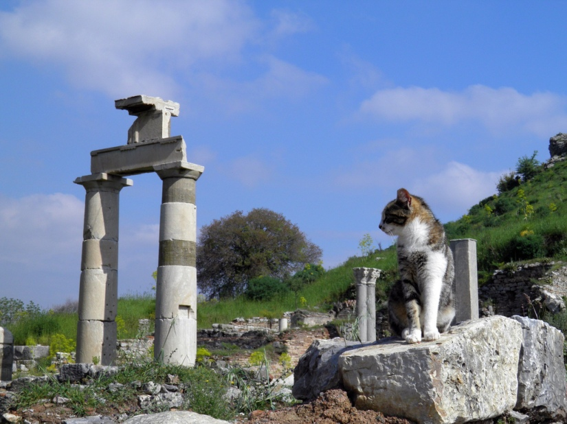 Picture of the day: Cat among the ruins of the Prytaneion, Ephesus, Turkey