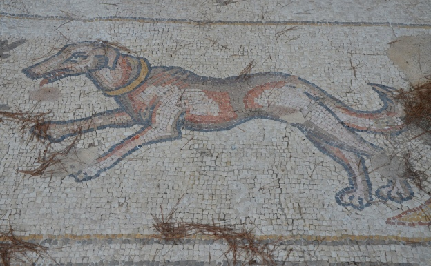 A dog, detail from the 6th century AD Bird Mosaic, Caesarea © Carole Raddato